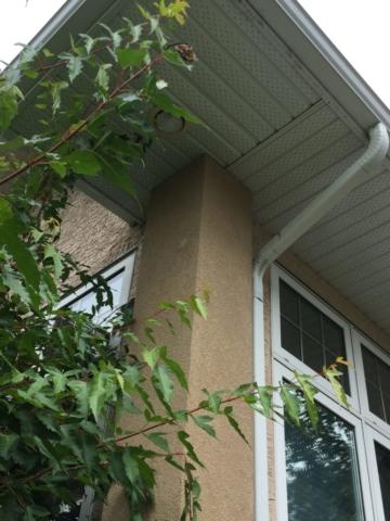 woodpecker house repair