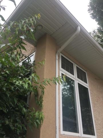 Stucco woodpecker Fix