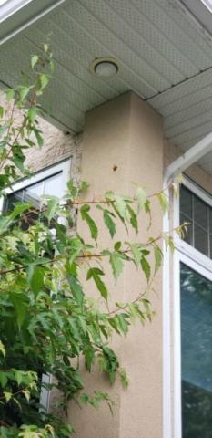 woodpecker stucco repair Hole